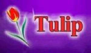 Tulip logo - Kopia